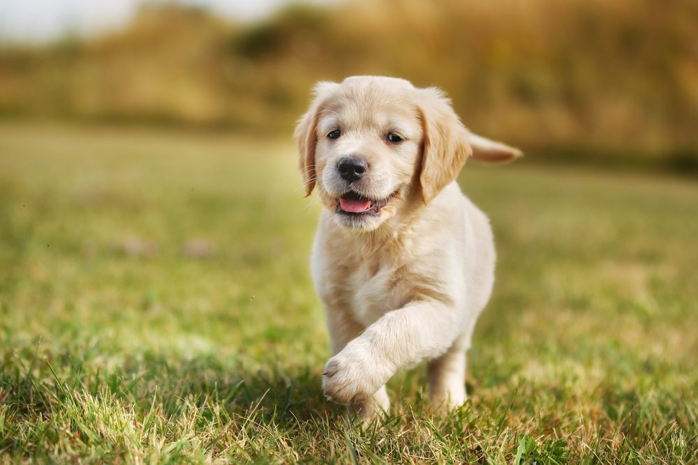 Port Kennedy Veterinary Hospital Puppy Preschool