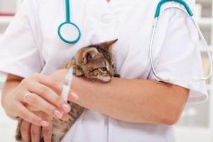 Port Kennedy Veterinary Hospital Vaccinations